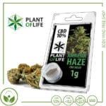 CBD Pollen (Hash) solid Plant of Life 10% CBD Amnesia Haze