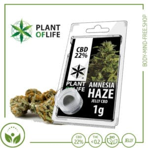 22% CBD Jelly solid Plant of Life 10% CBD Amnesia Haze