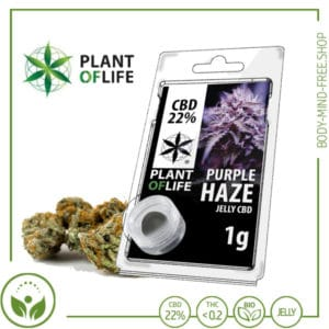 22% CBD Jelly solid Plant of Life 10% CBD Purple Haze