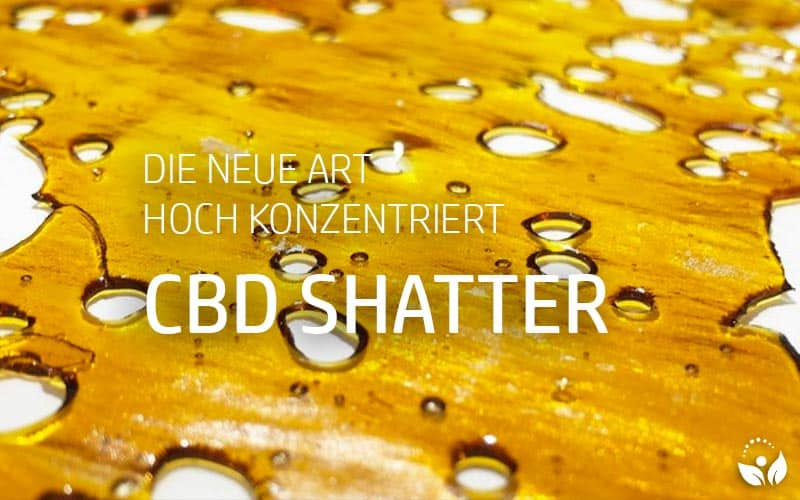 CBD Shatter - hoch konzentriertes Cannabidiol