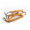 Cordyceps Pilz Superfood