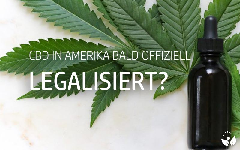 CBD in Amerika bald offiziell legal