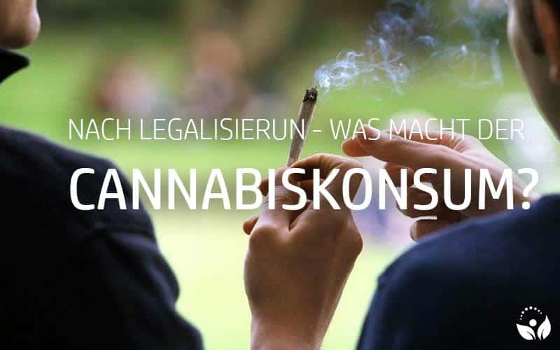Cannabiskonsum rückläufig nach Legalisierung