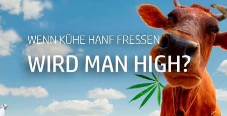 Macht uns Nutzhanf high?