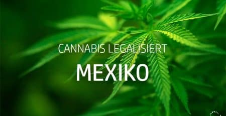 Cannabis legalisiert in Mexiko