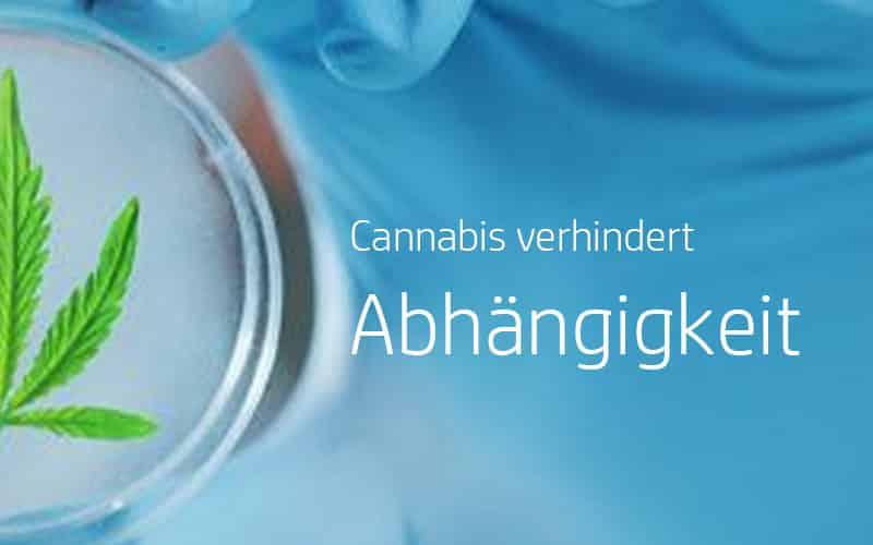 Cannabis verringert Abhängigkeit und steigert lebensqualität