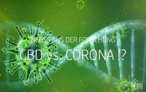 CBD versus COVID-19