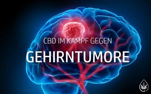 CBD wirkt effektic gegen manche Tumore im Gehirn